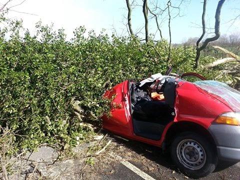 tree accident