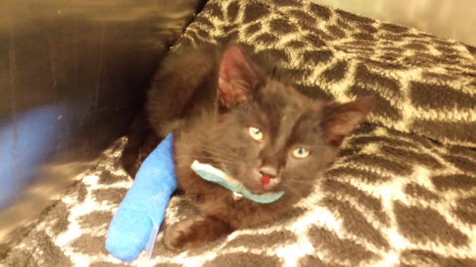 Cat rescued from the M1 in Lurgan