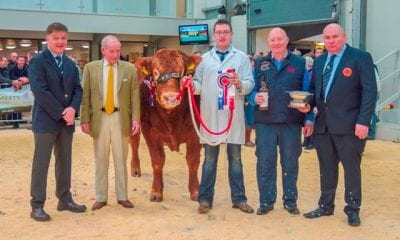 Trueman Jagger lifted the supreme championship ticket at the Limousin Society autumn show at Carlisle