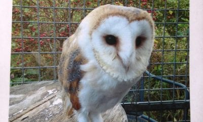 Barn owl 'Sky' stole from shed in Loughgilly