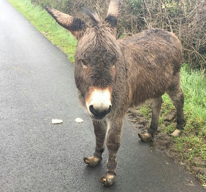 This donkey was reported to be a hazard to the public.