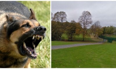 Dog attacks in Armagh