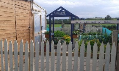 Cusher Meadow Allotments