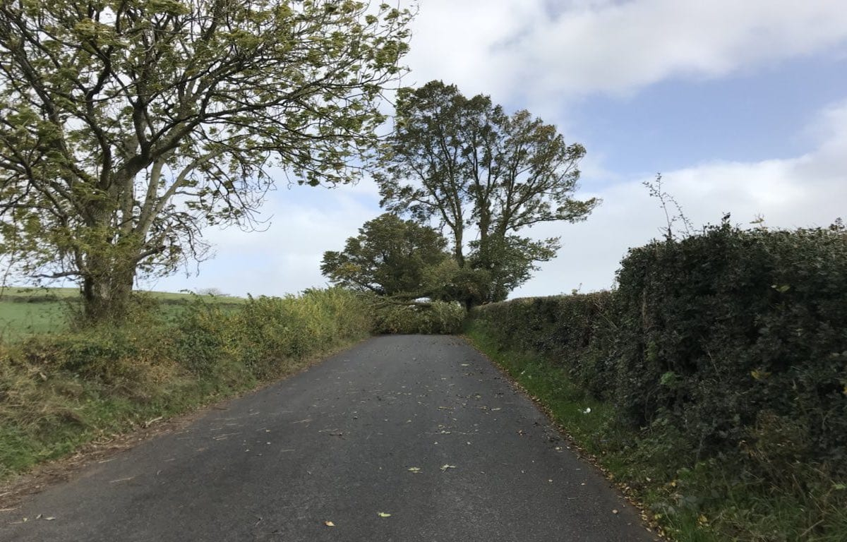 Man passes away after vehicle hit by tree in Dundalk