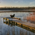 Loughgall Country Park by Tina Sterritt-Coulter
