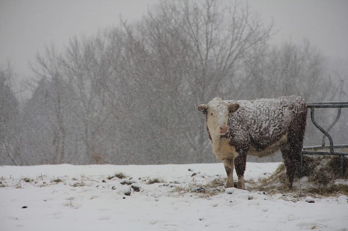 Farming snow