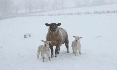 Armagh snow 28