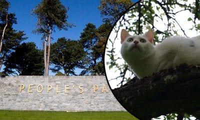 People's Park cat