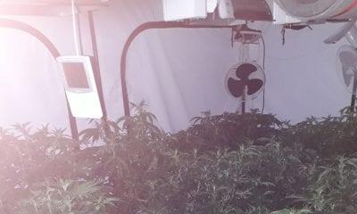 Culloville cannabis factory