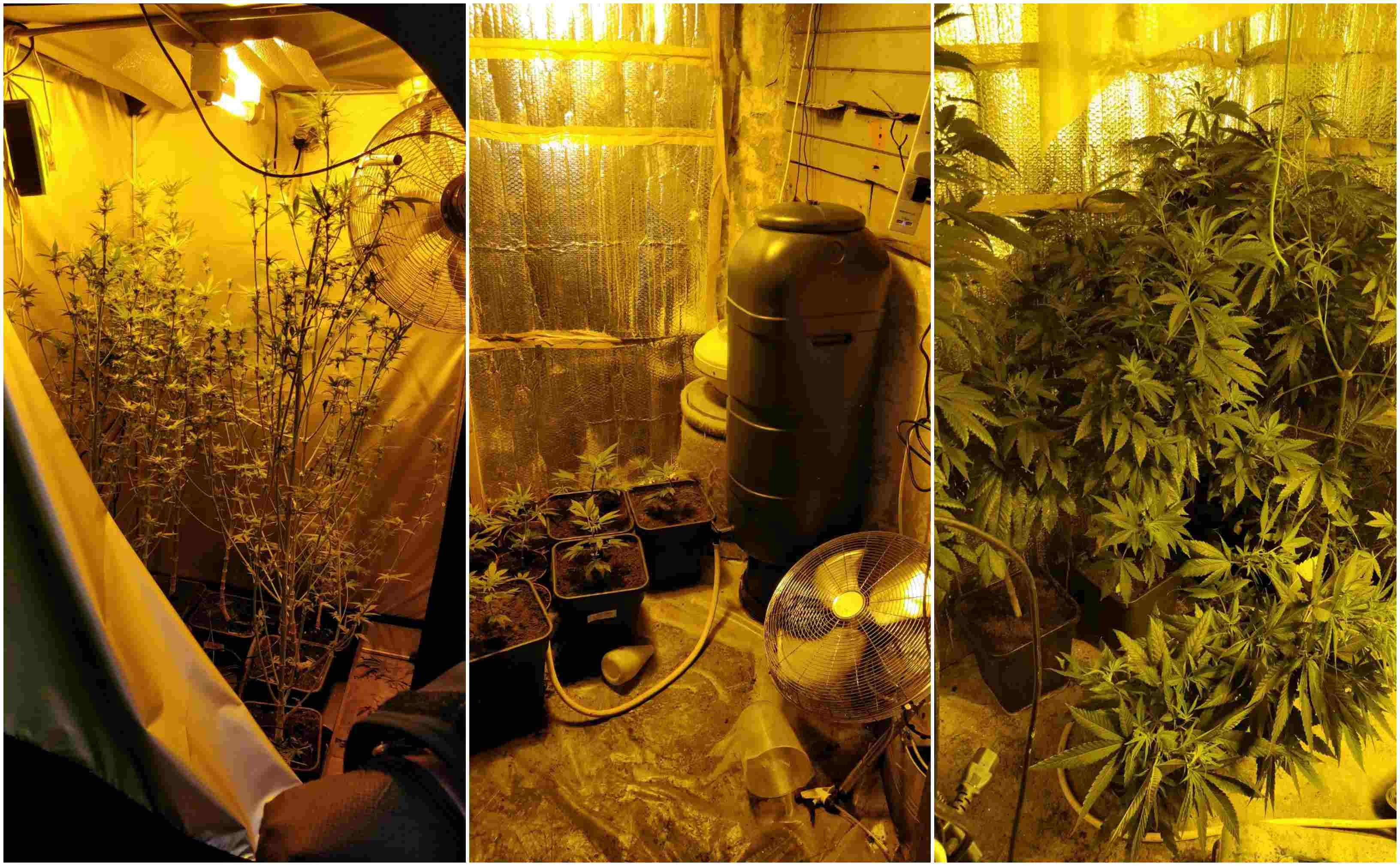 Cannabis Portadown