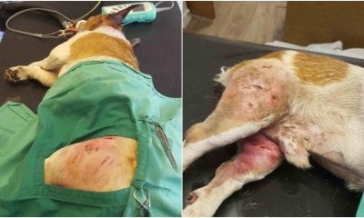 Injured dog Armagh