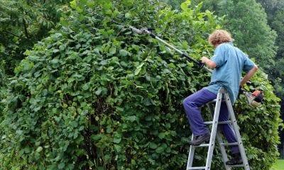 Hedge cut