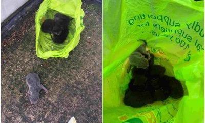 Mullaghbawn Kittens