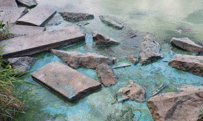 Blue algae Craigavon lakes
