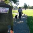 Enforcement dog fouling