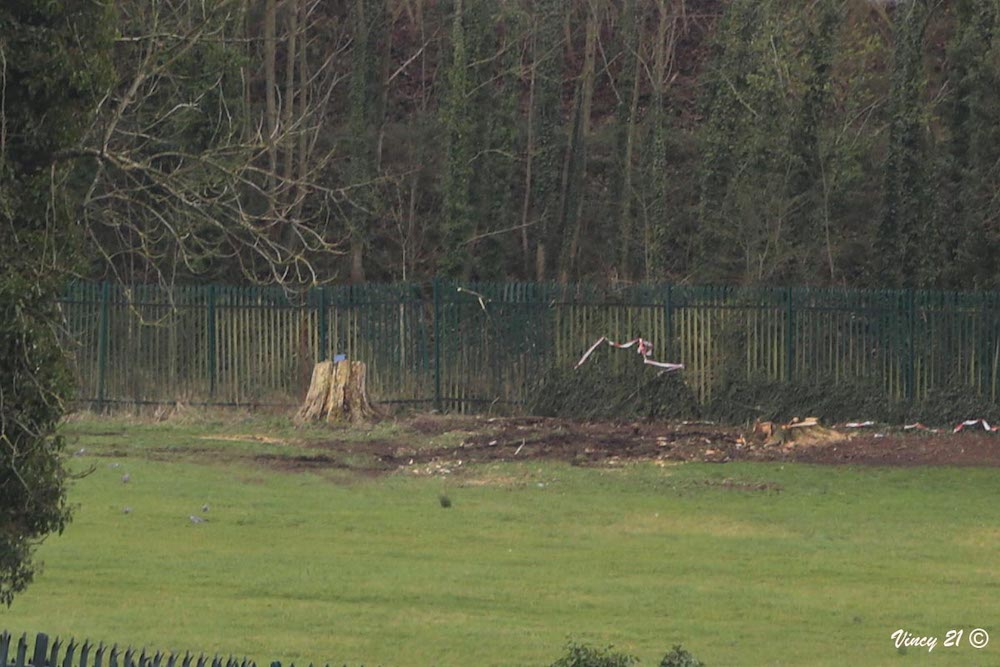 Trees felled College Fields Armagh