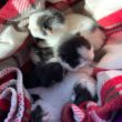 Cats found in Portadown