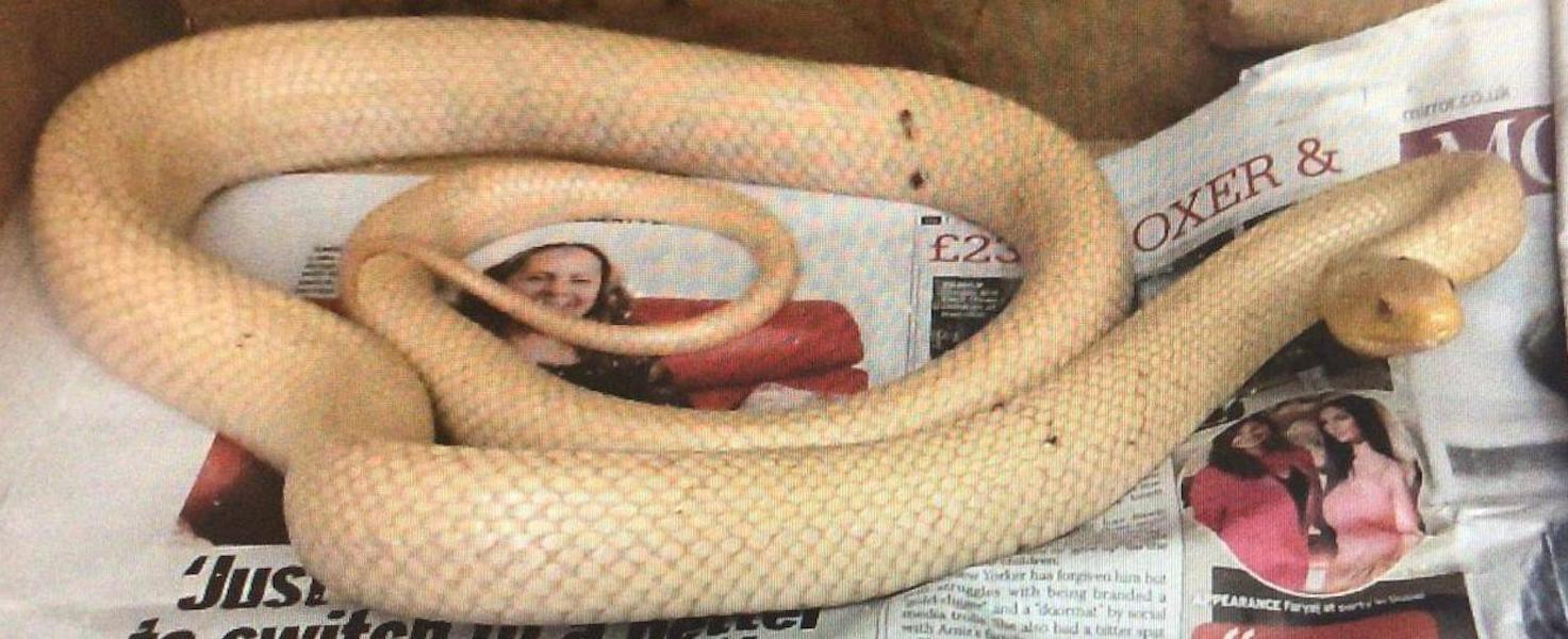 Snake Charlemont PSNI