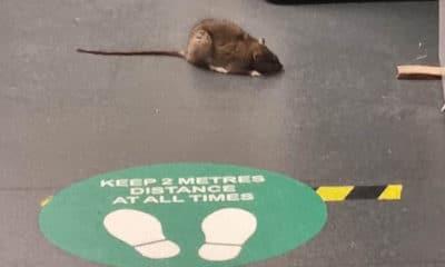 Rat Armagh ambulance station